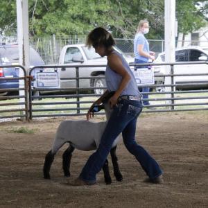 Girl with hand on sheep