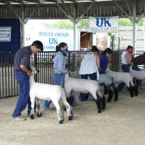 Sheep group photo